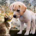 猫背は筋トレより女性に人気のアレで簡単に直る!